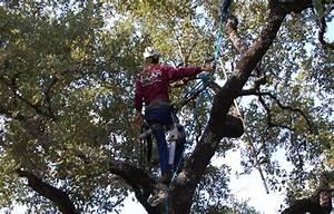 tree removal san antonio