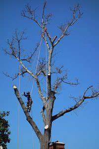 tree trim denver